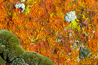 Sandstone Lichen Abstract #1