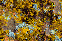 Sandstone Lichen Abstract #4