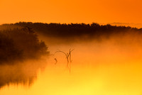 Foggy Sunrise - North Fork Area